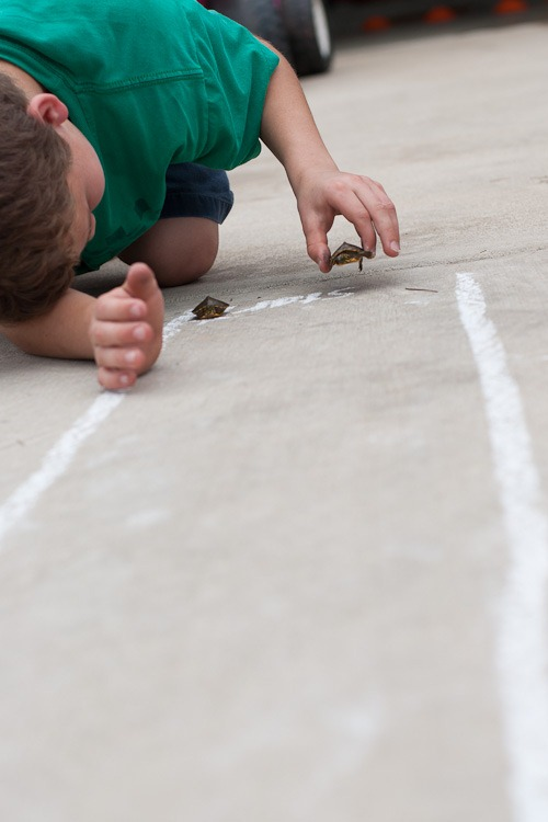 Turtle race blog-1