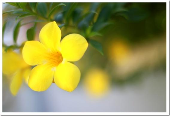 Jamaica Flower IMG_7039