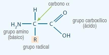 estructura general aminoacidos