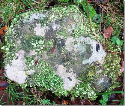 20111105 Metre Butterfly Rock