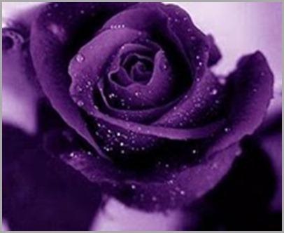 Flor violeta cardenal