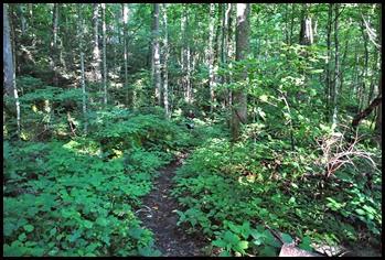 10 - Rock Garden Trail - Bill hidden amongst the green