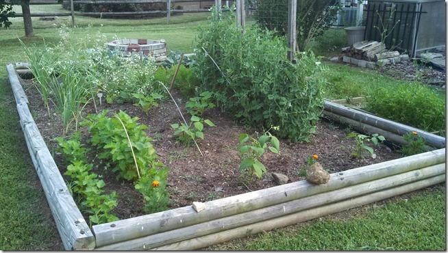 garden 06 (4)