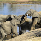 Ruaha Nationalpark, Elefantenherde am Ruaha © Foto: Ulrike Pârvu | Outback Africa Erlebnisreisen