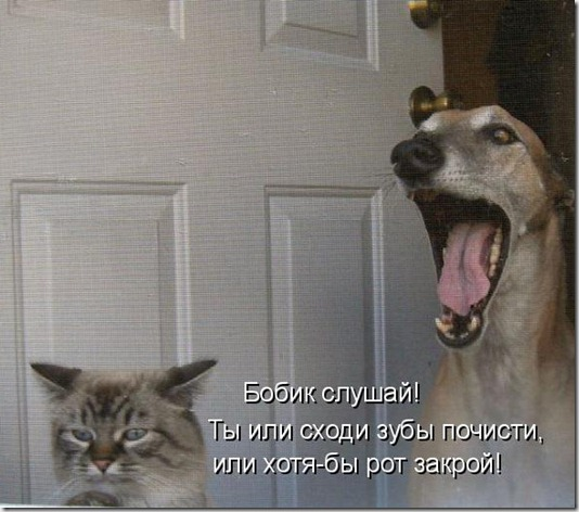 kotomatrix_67