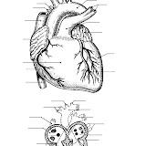Corazón para completar con los nombres