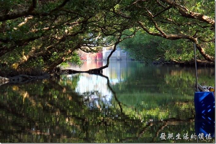 台南-四草竹筏綠色隧道。快到運河的盡頭-水閘門前這個就是【天使之吻】,但是這張照片只能看到左手邊的【天使之吻】而已,因為右手邊有工作船擋住了,水面上的樹幹與水中的倒影形成了類似「人嘴」的影像,左右兩個嘴唇遙相呼應,就像要互相親嘴的模樣