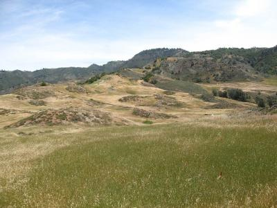 Native plants on a California reserve (in bloom on mounds in background) are found in marginal, patchy habitats following invasion by exotic grasses (in green in foreground). Ecologists at the University of Toronto and ETH Zurich have found that, given time, invading exotic plants will likely eliminate native plants growing in the wild despite recent reports to the contrary. James Cornwell