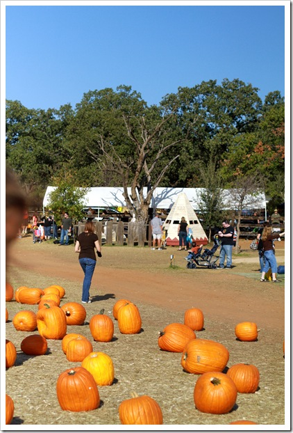 pumpkin patch IMG_9903