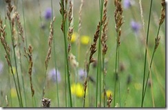 grasses and wild flowers