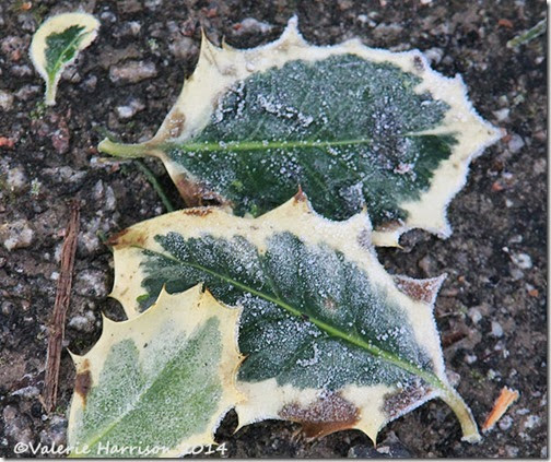 47-frosted-leaves