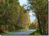 near Kincraig