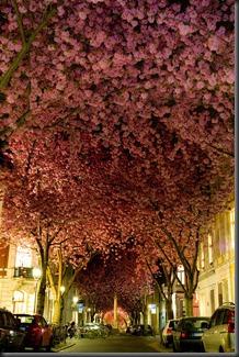 Street in Bonn, Jerman