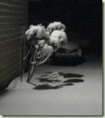 2013-03-06_03-15-59_475