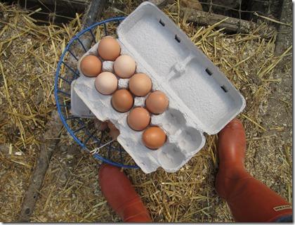 Farm Day Three 016