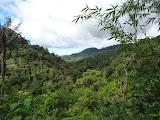 On the way from Sitabu to Aek Meriam while climbing Gunung Malintang (Mykhailo Pavliuk, April 2013)