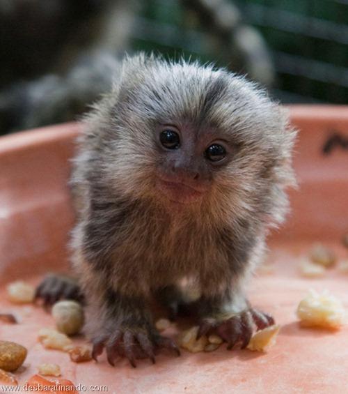 filhotes recem nascidos zoo zoologico desbaratinando animais lindos fofos  (43)