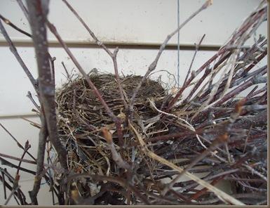 Birdsnest 2