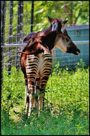 Zoo6 249