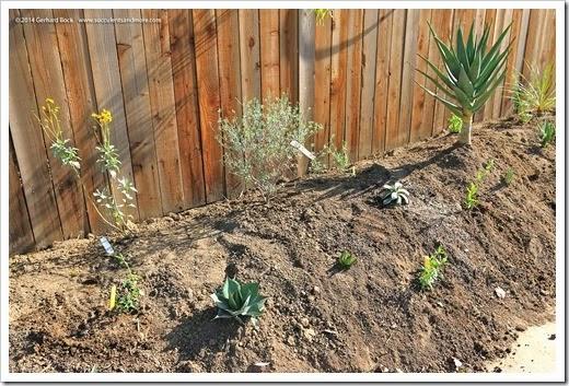 140316_desert_garden_planting5