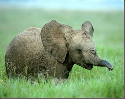 Amazing Animals Pictures Elephant (4)