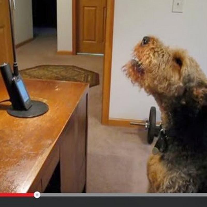 Σκύλος μιλαει  στο τηλέφωνο