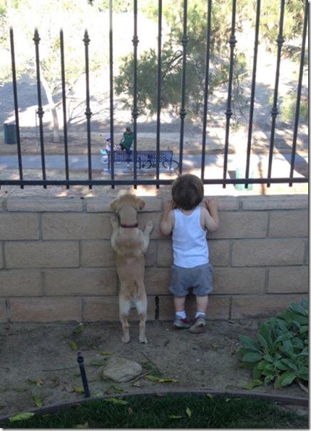 dog-mans-best-friend-28