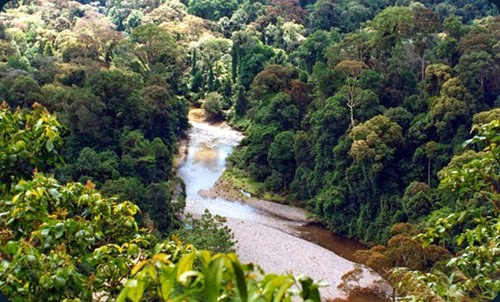 rainforest borneo_river