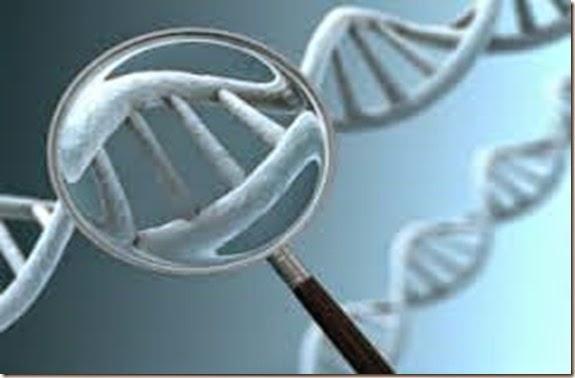 test genetici per i cani (2)