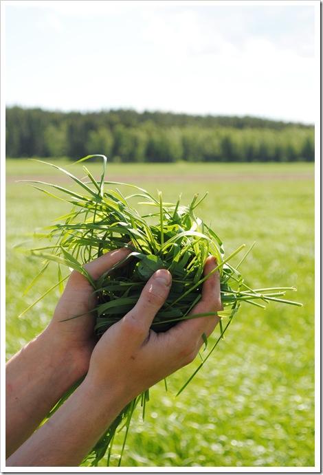 Doft av nyslaget gräs