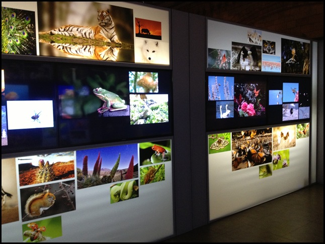 Extinction Exhibition - Natura History Museum