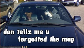 loldogs-funny-picture-you-forgot-the-map