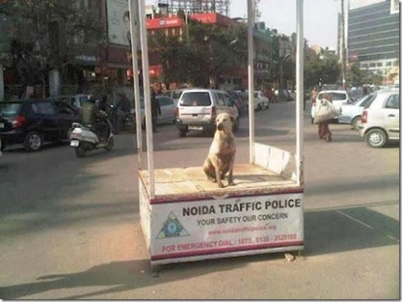 meanwhile-india-30