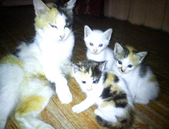gambar anak kucing