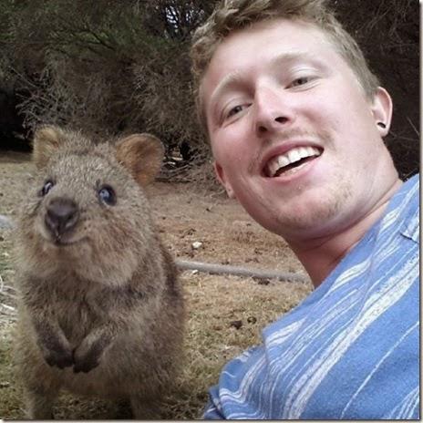 selfies-australian-quokka-025