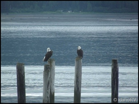 2-Eagles-on-Pilings