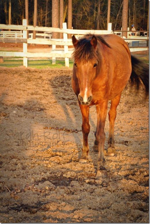 horse-at-dusk-3