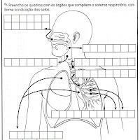 sistema respiratório - cruzadinha.jpg