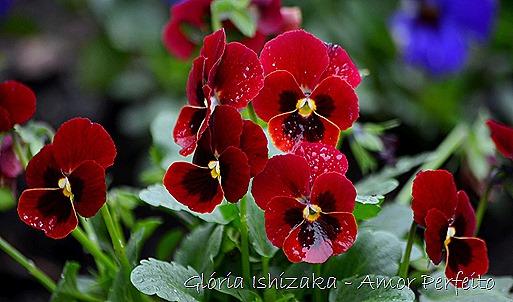 amor perfeito - Glória Ishizaka.1