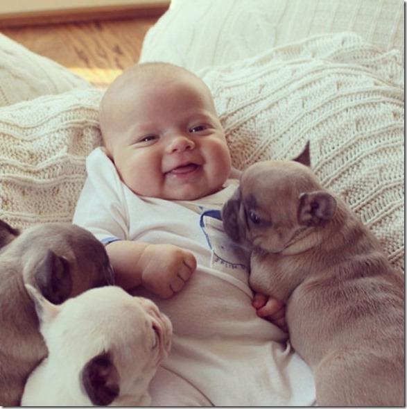 baby-bulldog-puppies-8