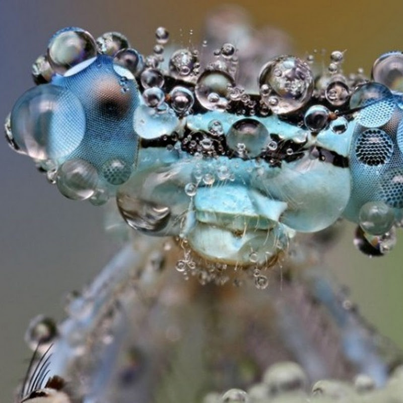 Dew Covered Insects Photographed by Ondrej Pakan