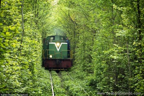 tunel do amor ucrania desbaratinando  (5)