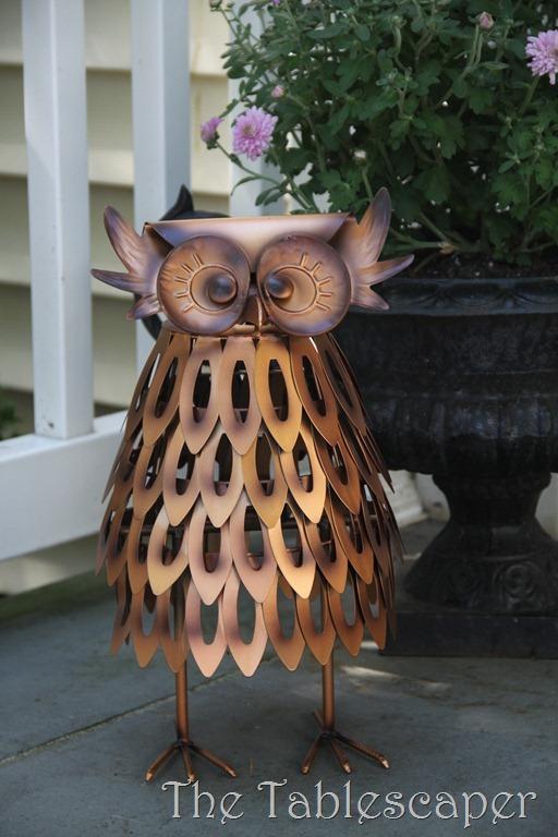 Owls 023