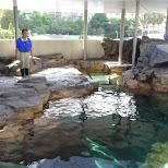 outdoor aquarium at the Shinagawa Aquarium in Shinagawa, Tokyo, Japan
