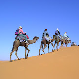Into the sahara