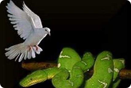 Prudentes como a serpente; simplices como pomba