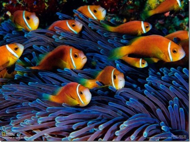 Fotos subaquáticas de David Doubilet (24)