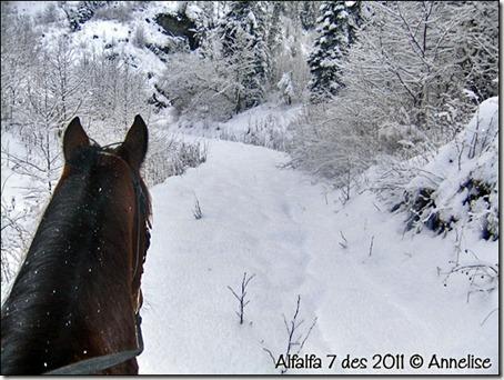 2011-alf7des_01