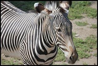 Zoo5 044