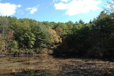 池に落ちた葉っぱ